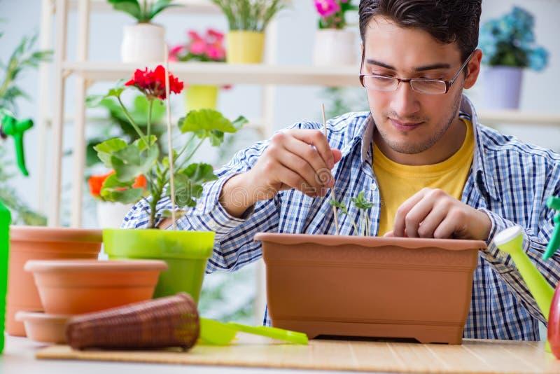 Флорист молодого человека работая в цветочном магазине стоковое фото rf