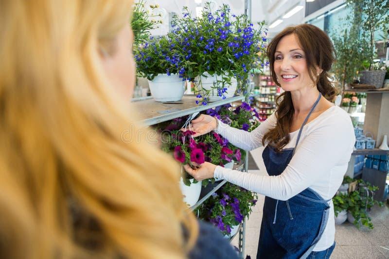 Флорист показывая завод цветка к клиенту в магазине стоковые изображения rf