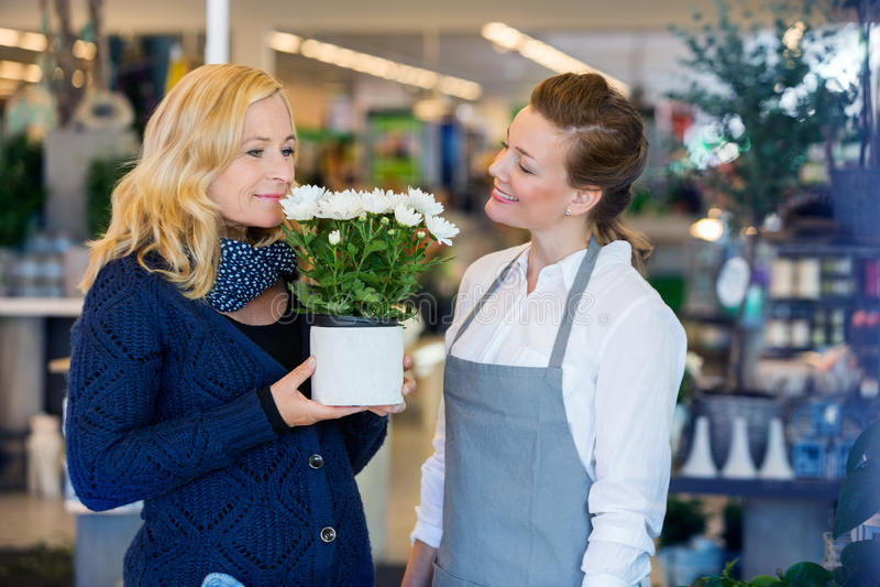 Флорист смотря цветки клиента пахнуть внутри стоковая фотография