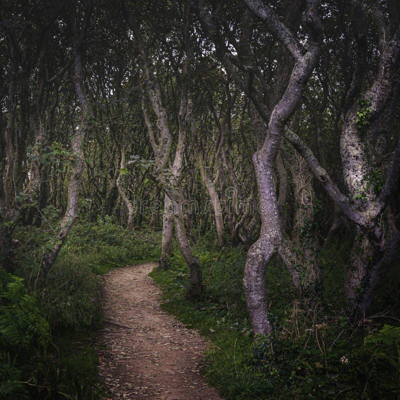 Хазисный выкрученный лес стоковые фото