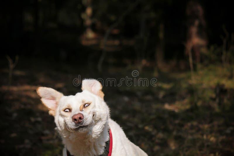 Ханжи смешной стороны собаки заразительные стоковые изображения