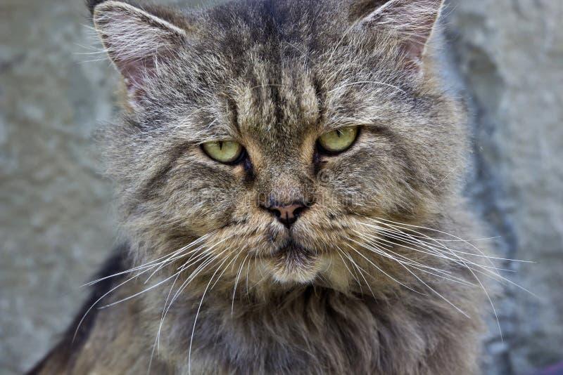 Характеристики ухода за лицом кота любимчика стоковые фото