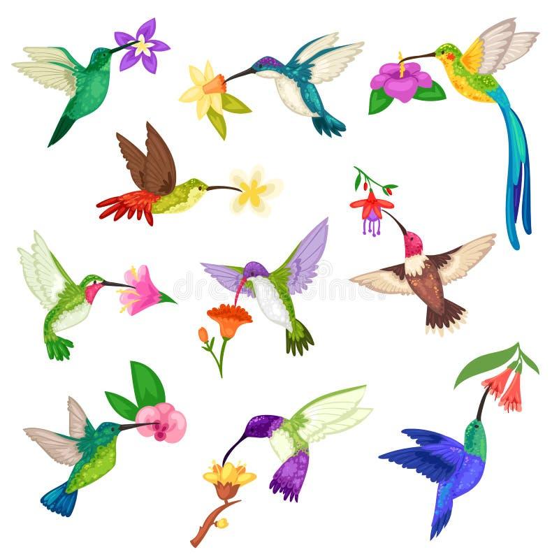 Характер птицы припевать вектора колибри тропический с красивой пташкой подгоняет на экзотических цветках в живой природе природы иллюстрация штока