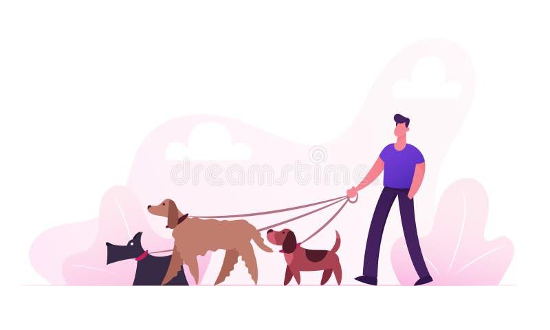 Характер реактор-размножитела мужской идя с командой собак ослабляя в парке Забота любов связи отдыха мероприятий на свежем возду бесплатная иллюстрация