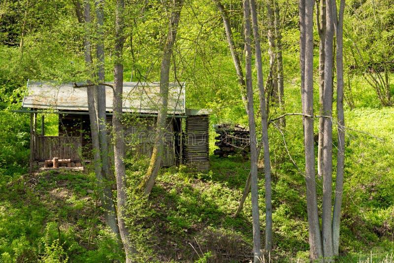 Хата в глубоком ом-зелен лесе стоковая фотография