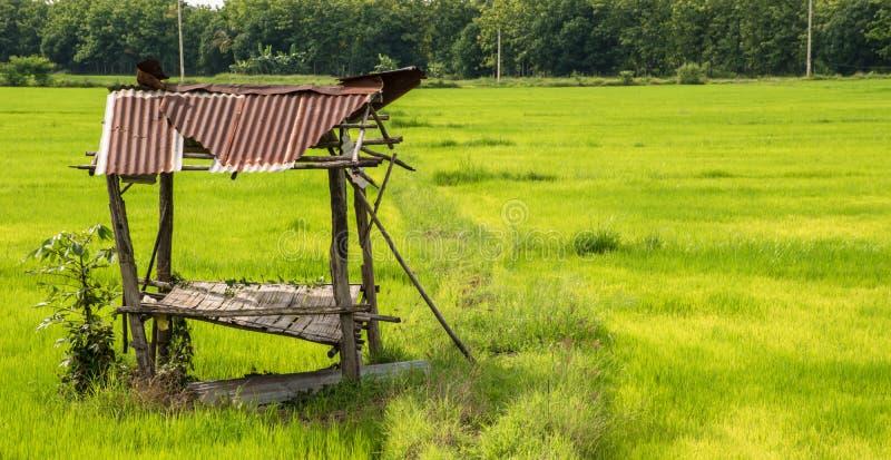 Хата в поле риса на день стоковое фото rf