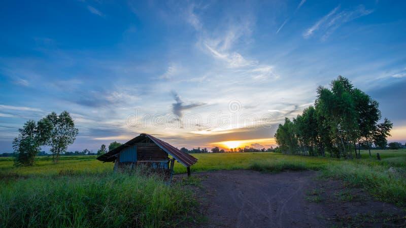 Хата в рисе зеленого цвета fields с заходом солнца стоковое изображение
