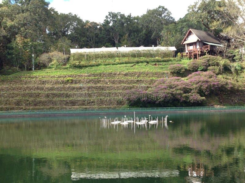 Хата в ферме и водном бассейне стоковое изображение