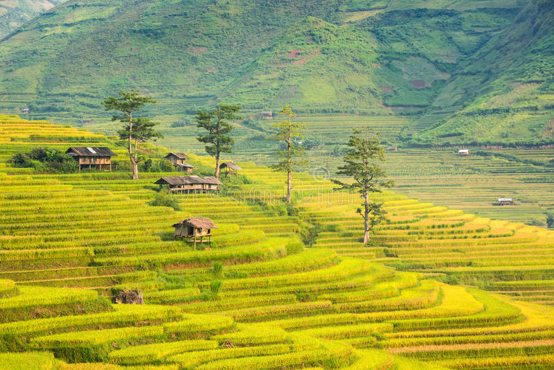 Хата и природа горы в террасе риса ландшафта Вьетнама стоковые изображения rf