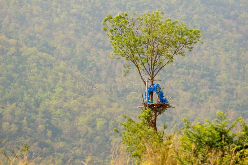 Хата леса стоковые фотографии rf