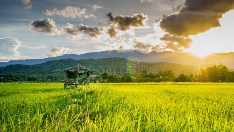 Хата на аграрных полях в сельском Таиланде стоковое фото