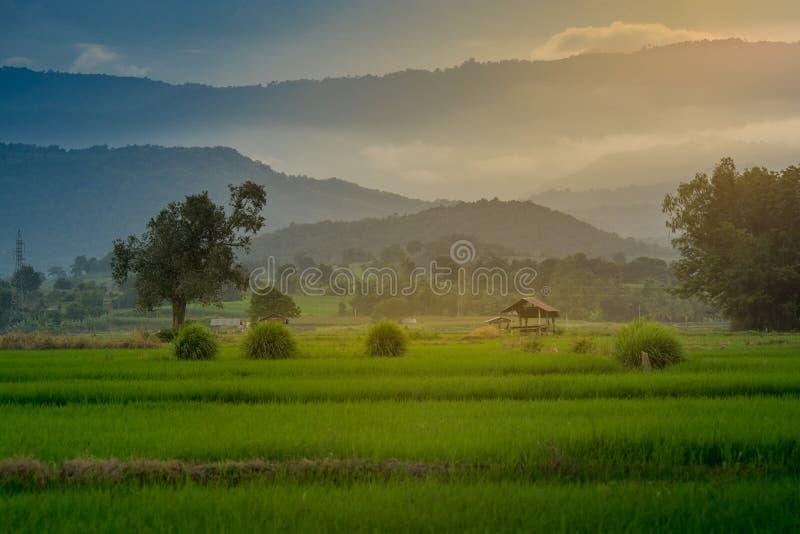 Хата на аграрных полях в сельском стоковое изображение rf