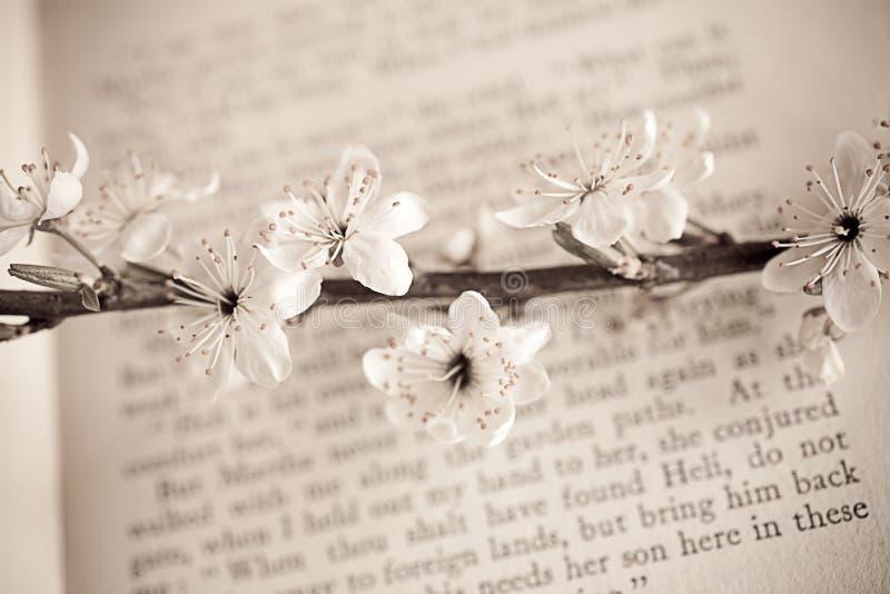 Хворостина весны с белыми цветениями яблока на книге стоковое фото rf