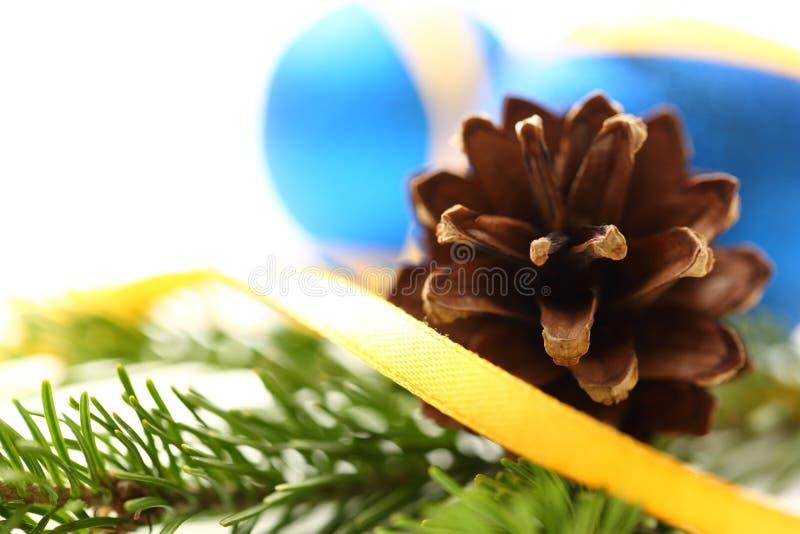Хворостина вечнозеленой ели стоковое изображение