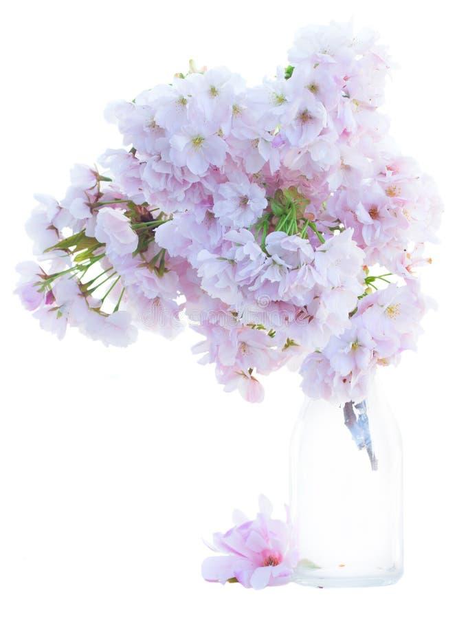 Хворостина розовых цветков весны стоковая фотография rf