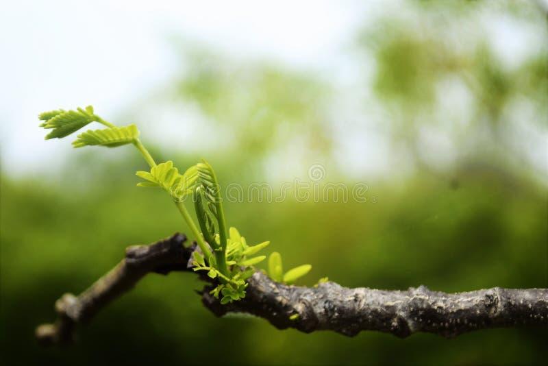 Хворостины и листва стоковая фотография rf