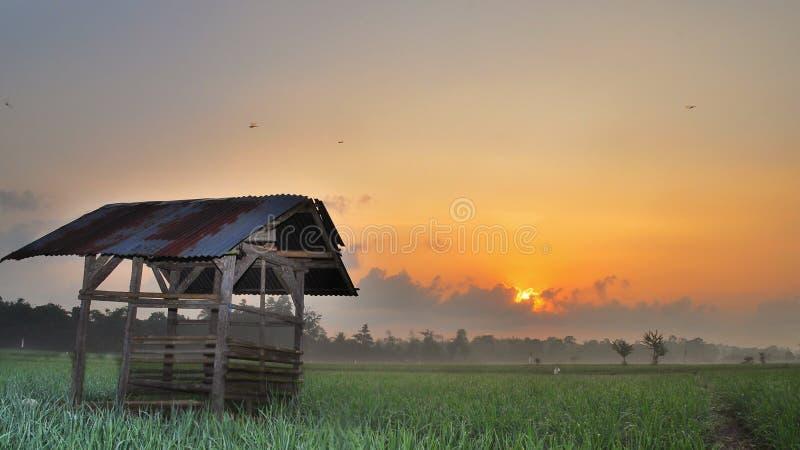 Хижина в зеленом поле риса на вечере с красивой предпосылкой неба стоковые фотографии rf