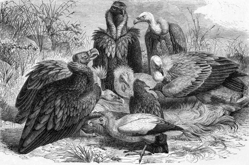 Хищники иллюстрация штока