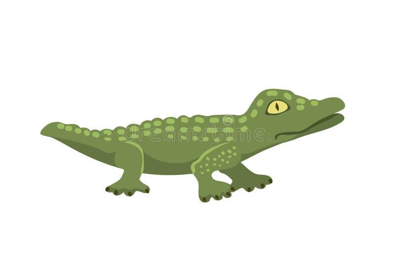 Хищник опасности крокодила шаржа зеленый и австралийский аллигатор мясоеда гада реки живой природы с зубами масштабов плоскими бесплатная иллюстрация