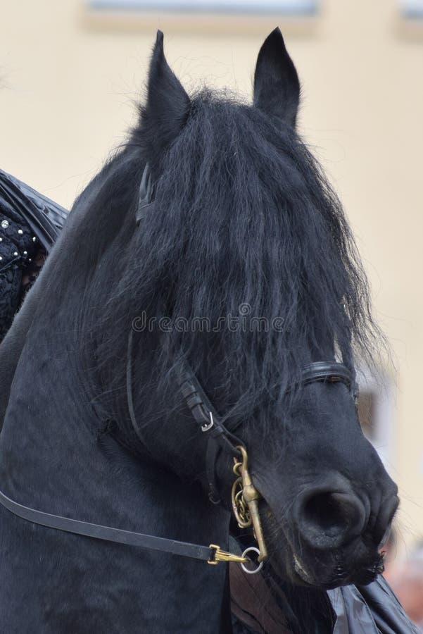 Хладнокровная лошадь стоковые изображения rf