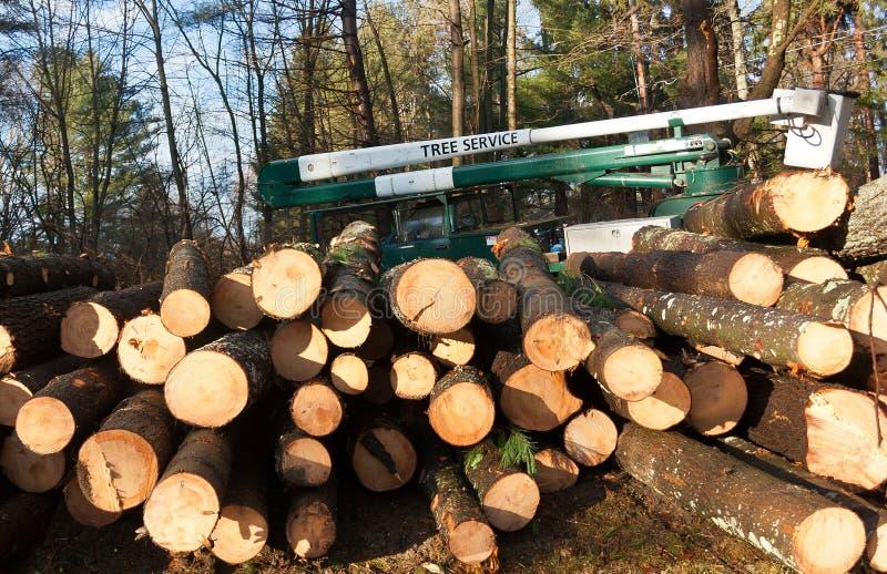 Хлебоуборка дерева сосенки стоковые фото