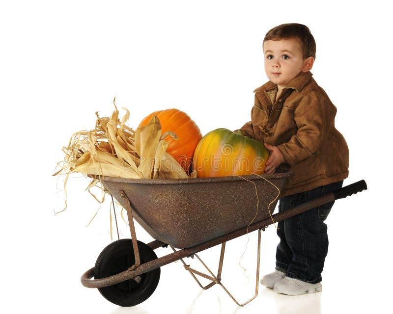 хлебоуборка младенца стоковая фотография rf