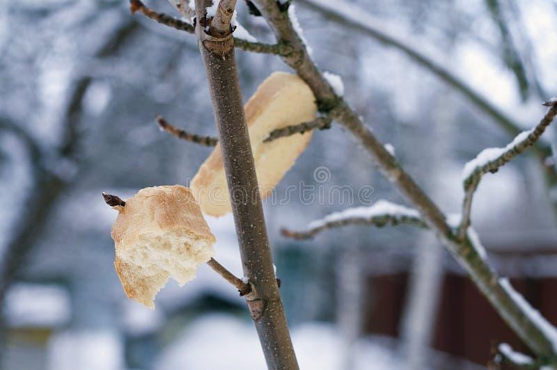 Хлеб для птиц в зиме стоковая фотография
