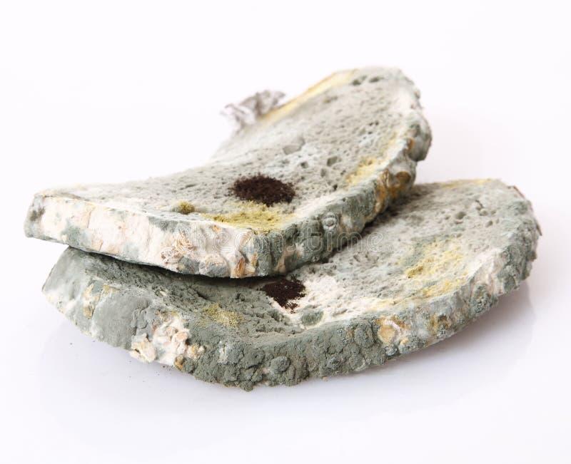 хлеб moldy стоковые изображения rf