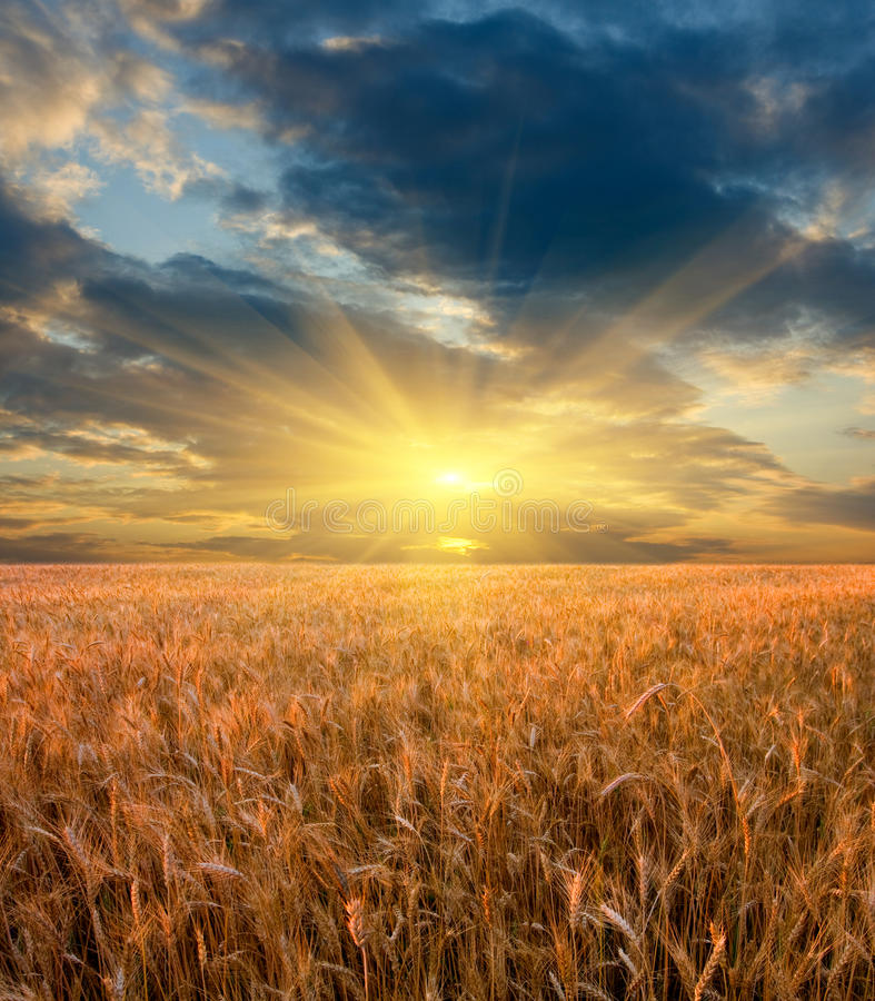 хлопья field над заходом солнца стоковое изображение