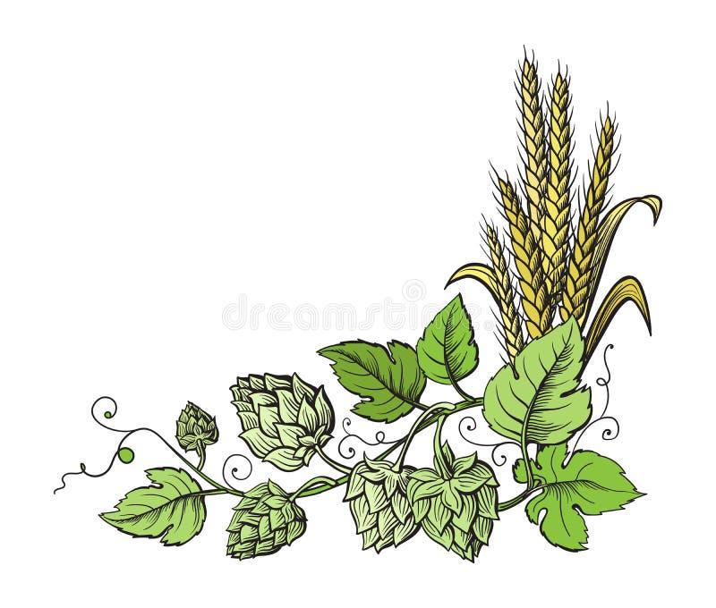 Хмели пшеницы и пива разветвляют с ушами пшеницы, листьями и конусами хмеля бесплатная иллюстрация
