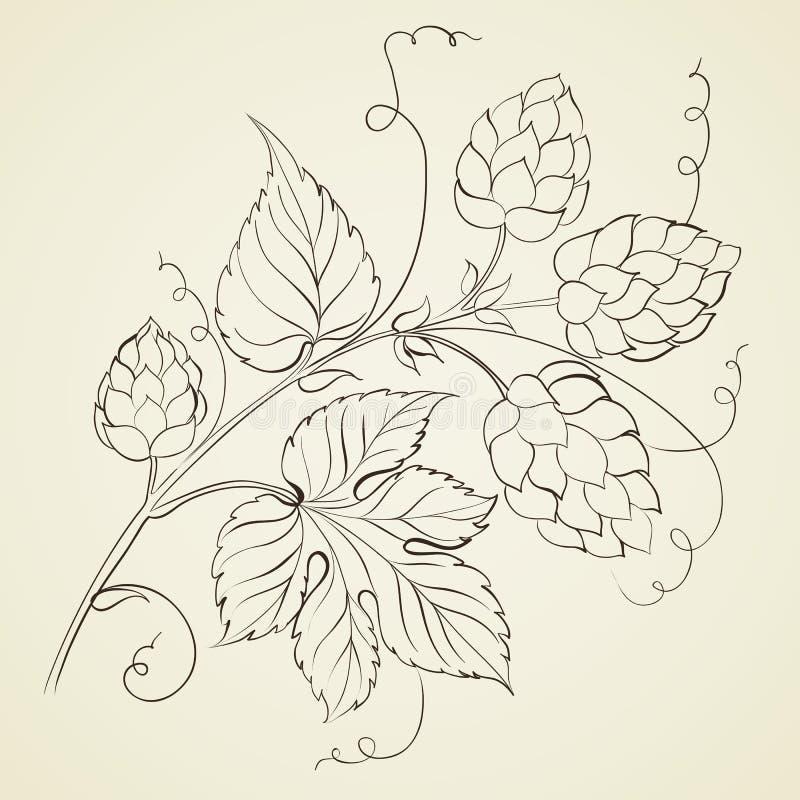 Хмель при изолированные листья. бесплатная иллюстрация