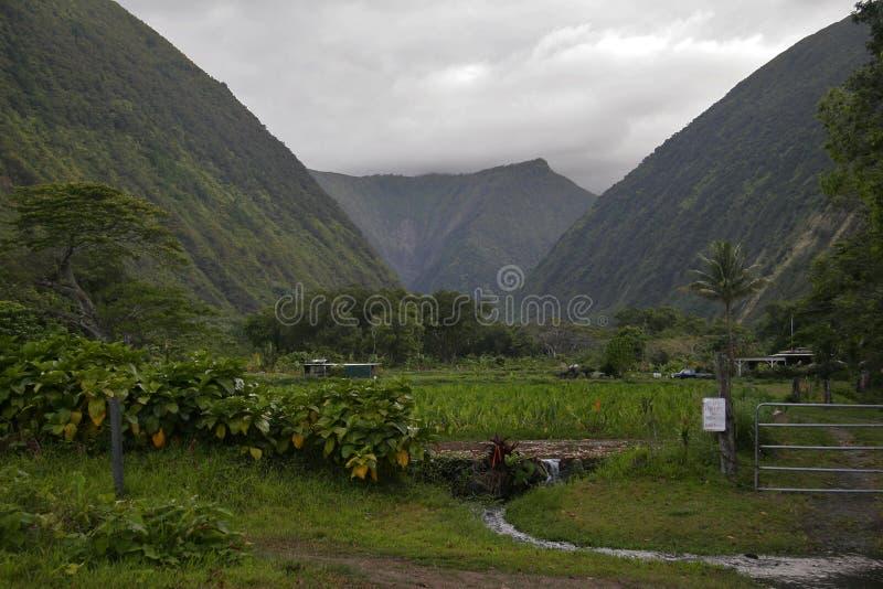 хмурые джунгли Гавайских островов стоковая фотография rf