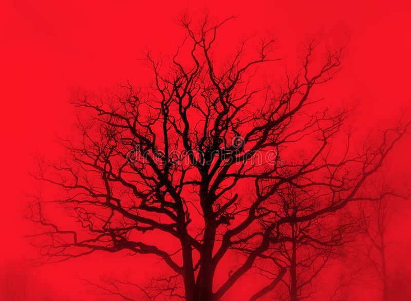 хмурый красный цвет дуба тумана стоковое фото rf