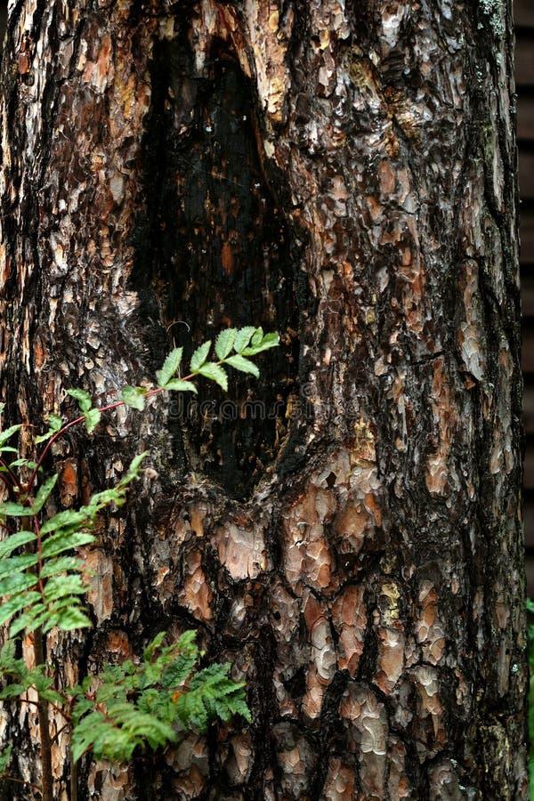 Хобот больного дерева стоковая фотография
