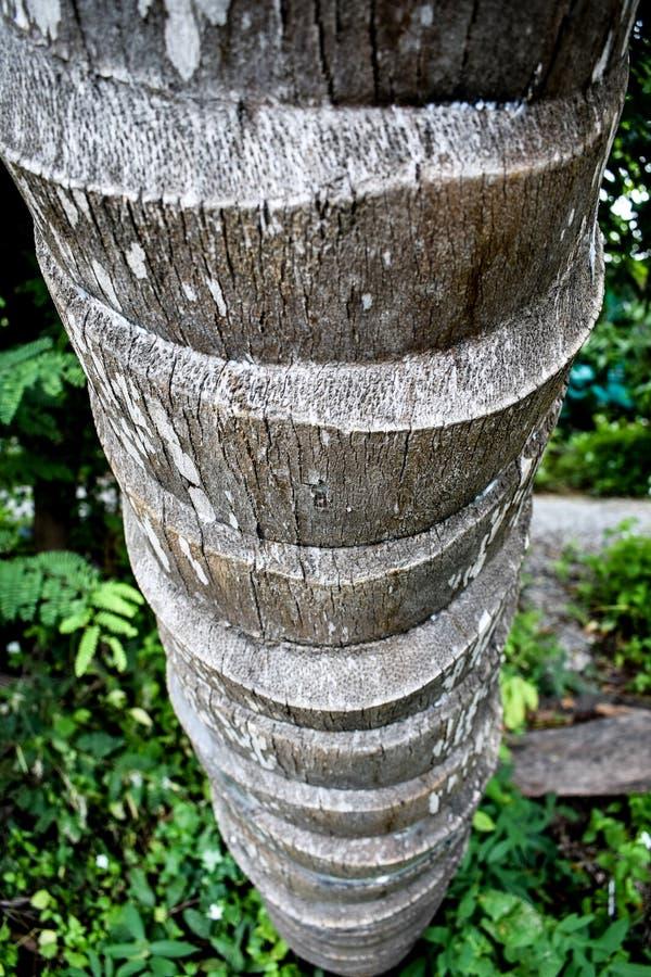 Хобот кокоса стоковая фотография rf