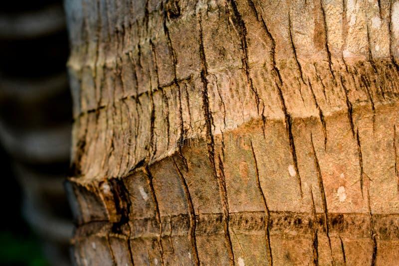 Хобот кокоса стоковые фотографии rf