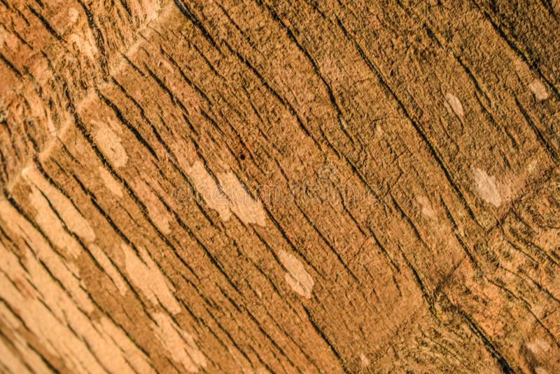 Хобот кокоса стоковое изображение