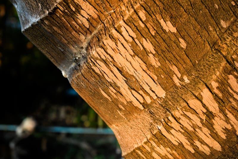 Хобот кокоса стоковое фото