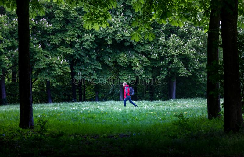 Ходок в красивый лес стоковые изображения rf