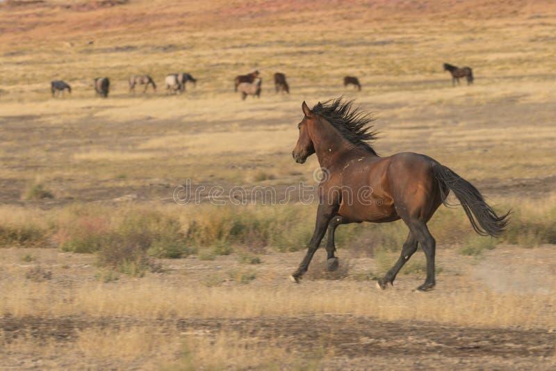 Ход одичалой лошади стоковое изображение rf