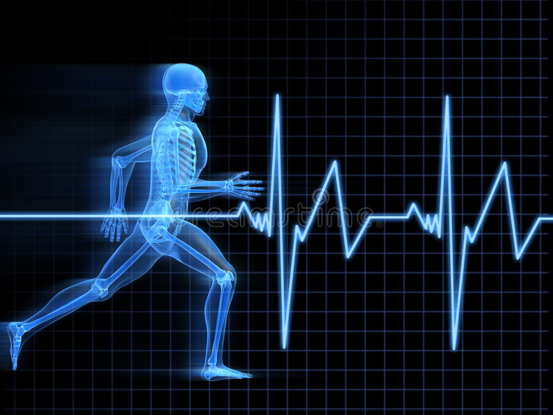ход человека анатомирования