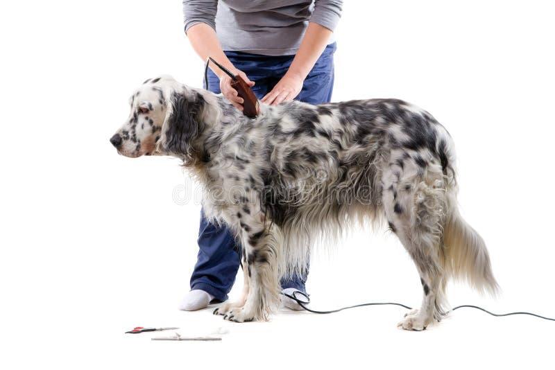 холить собаки стоковая фотография rf