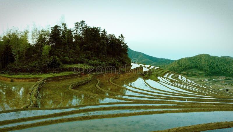 Холмистое террасное поле стоковые фотографии rf