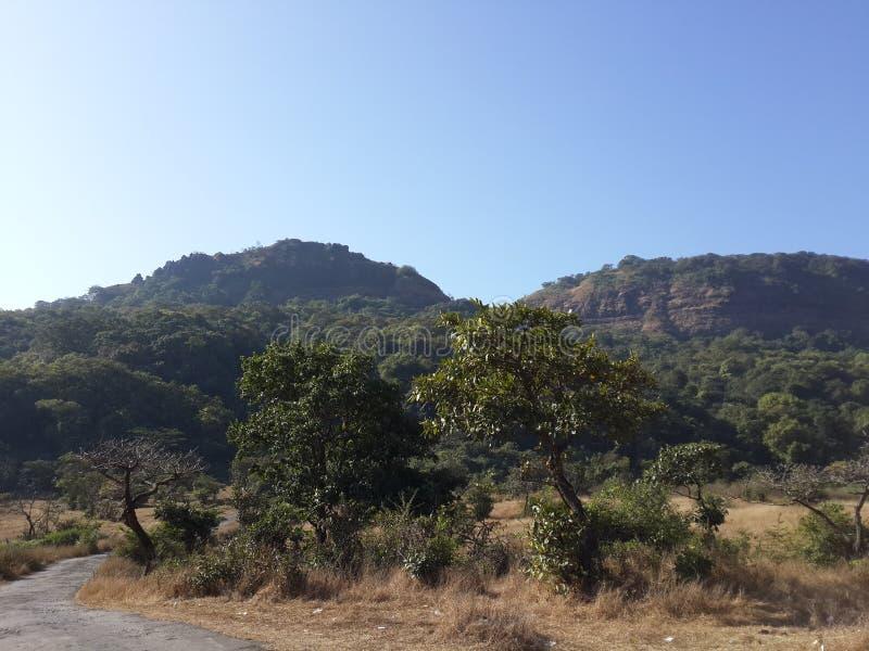 Холмы и горная цепь, взгляд ландшафта растительности деревьев стоковое фото