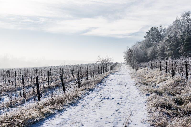 холмы предгорья landscape линии 2 зима виноградника села стоковые изображения rf