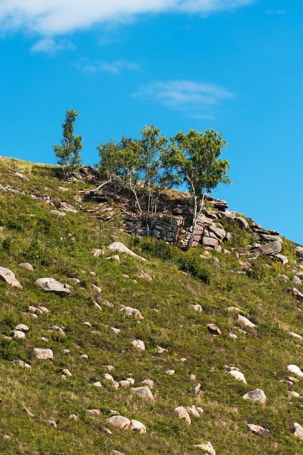 Холмы с камнями Altai, южный Сибирь, Россия стоковое изображение rf