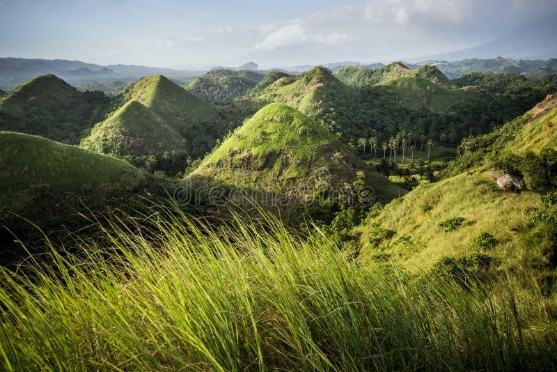 Холмы шоколада в провинции Bohol стоковые изображения