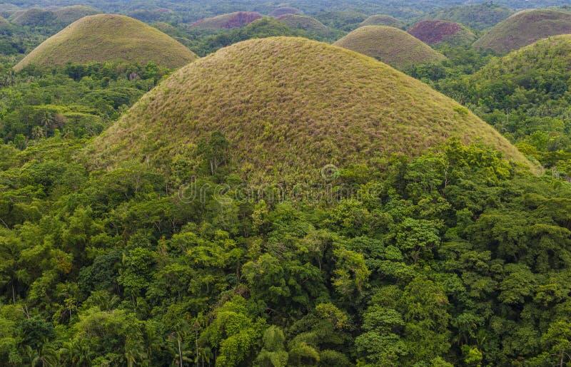 Холмы шоколада, Bohol стоковые изображения rf