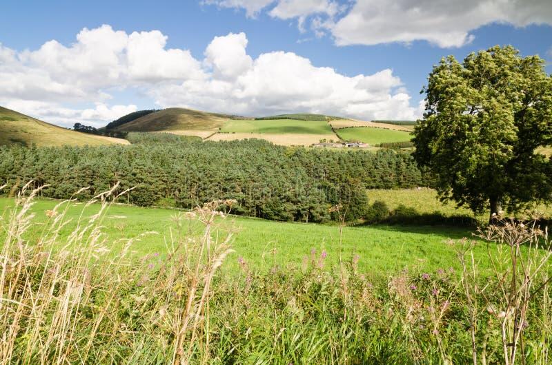Холмы Northumberland стоковые изображения rf