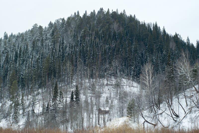Холм зимы лесистый с малой хатой на ноге стоковое фото